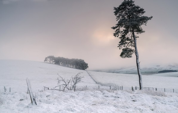 Picture field, snow, fog, tree