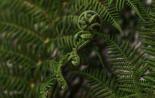 Picture leaves, macro, nature, fern