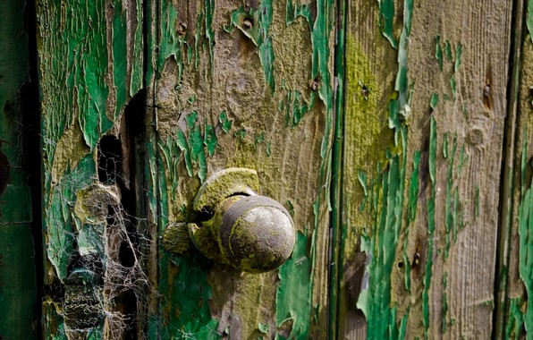 Picture background, web, the door