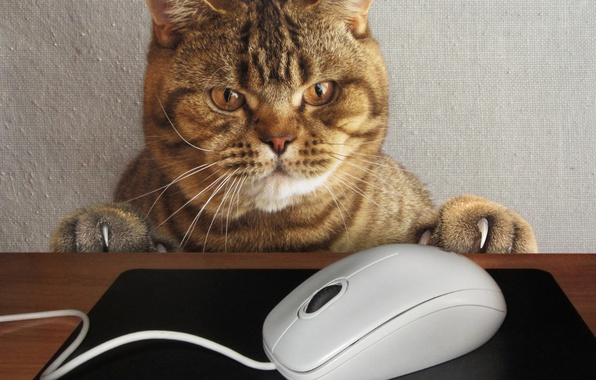 Picture cat, look, face, table, the situation, paws, mouse, claws, wire, Mat, computer