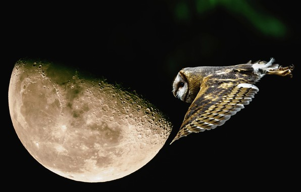 Wallpaper flight, night, owl, the moon