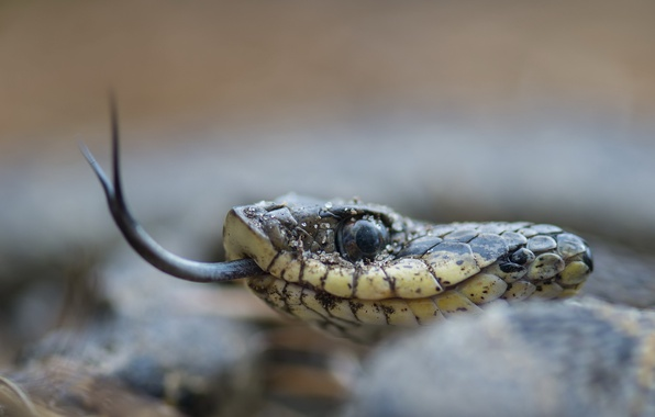Picture macro, nature, snake