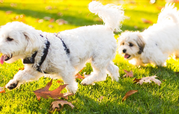 Picture animals, grass, leaves, nature, puppy