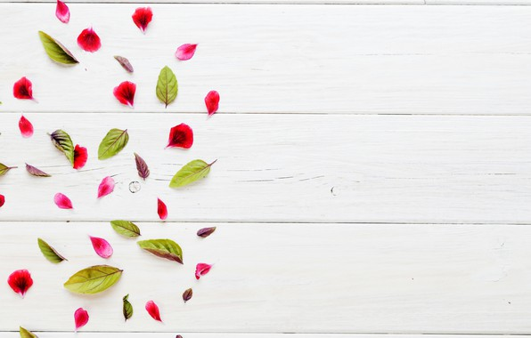 Picture texture, petals, white background, leaves