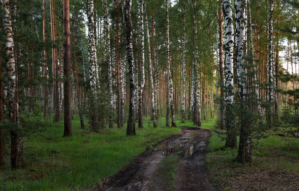 Picture road, forest, Tver oblast