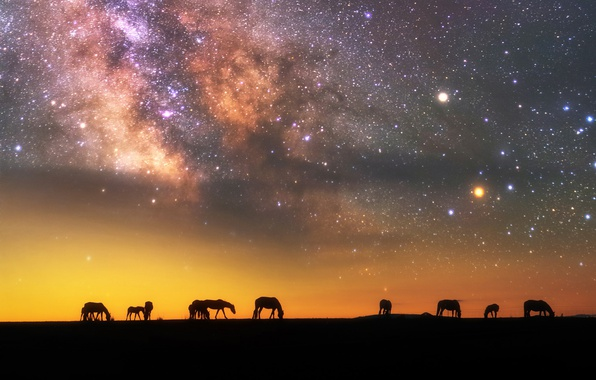Picture the sky, stars, night, the evening, horse, the milky way, silhouettes