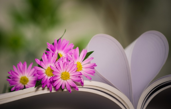 Picture flowers, heart, book, bokeh