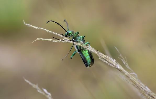 Picture macro, bug, graas, greeen, Richard Kosmala
