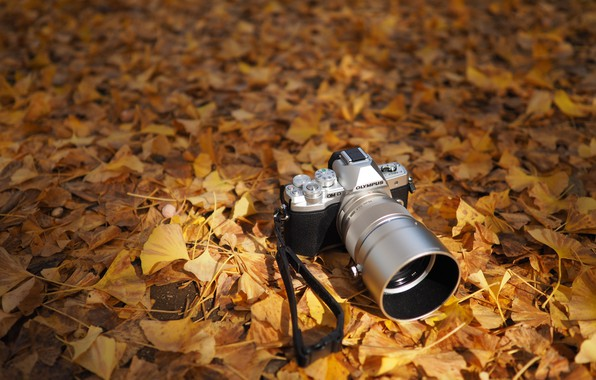Picture autumn, leaves, the camera, Olympus OM-D