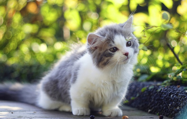 Picture baby, cute, kitty