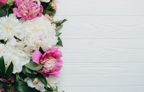 Picture flowers, buds, peonies