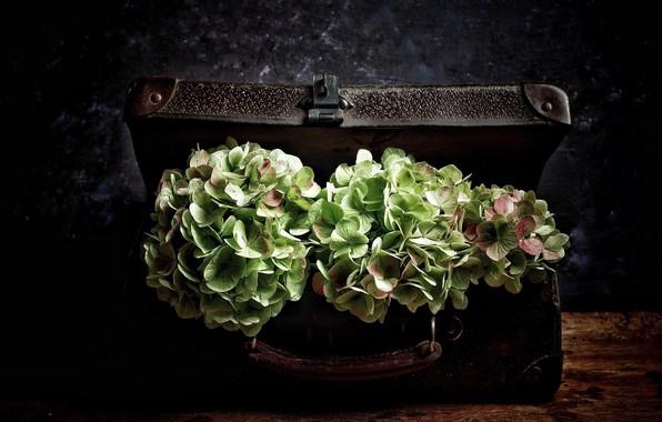 Picture flowers, suitcase, vintage, hydrangea, bouquets