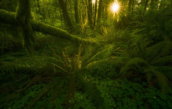 Picture Green, Sun, Forest, Beams