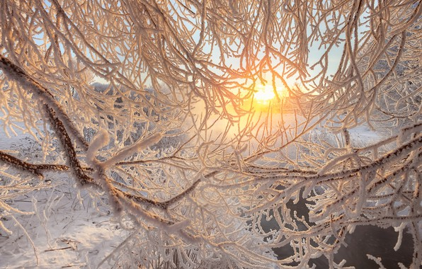 Picture winter, frost, branches, river, dawn, morning, Saint Petersburg, Russia, Murinsky Park