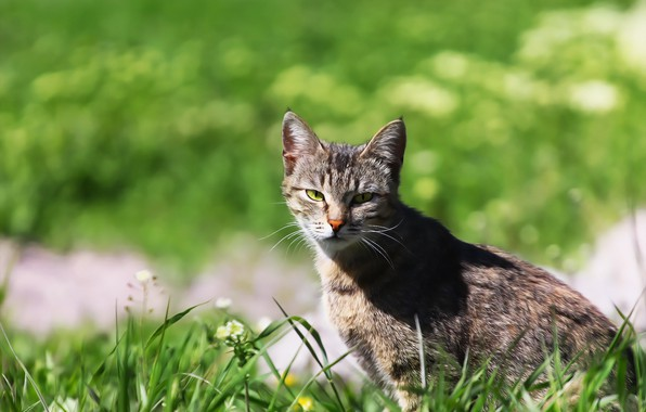 Picture greens, cat, look, background, weed