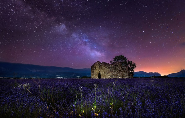 Picture field, the sky, stars, night, tree, collapsed, the milky way, lavender