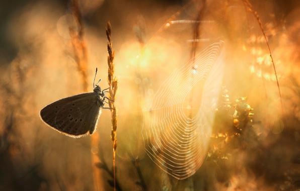 Picture grass, macro, light, butterfly, web, morning, bokeh