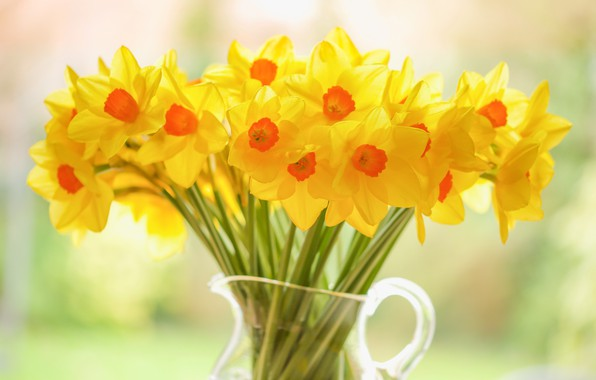 Picture bouquet, pitcher, yellow, Daffodils