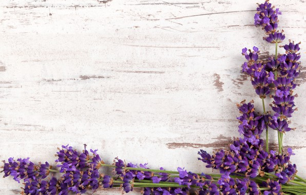 Picture branches, wood, flowers, lavender, lavender