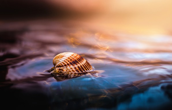 Picture sea, water, macro, shell