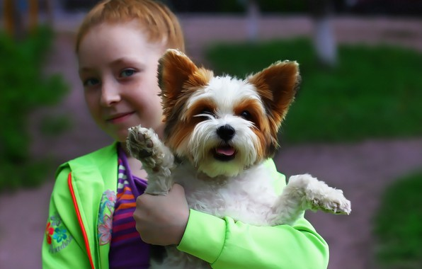 Picture each, girl, dog, pet, York-Terrier