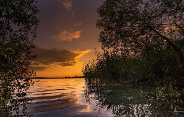 Picture water, lake, the evening