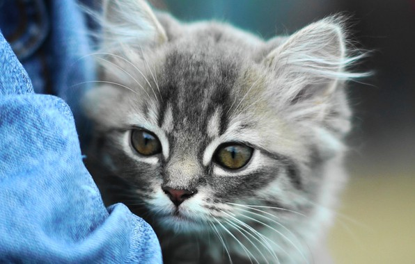 Picture look, kitty, eyes, cute