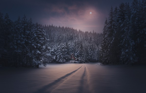 Picture winter, forest, snow, night, traces, the moon, house