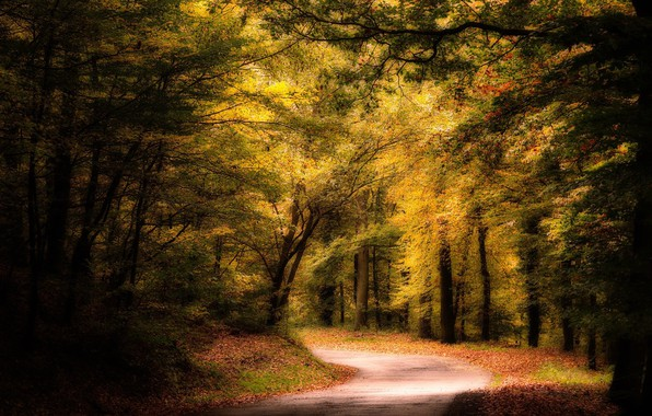 Picture road, forest, landscape, nature, beauty