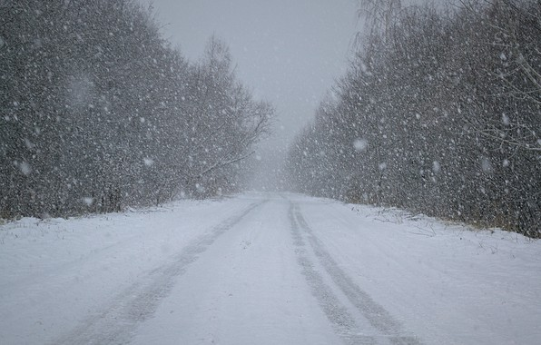 Picture winter, road, forest, snow, nature, minimalism, snowfall