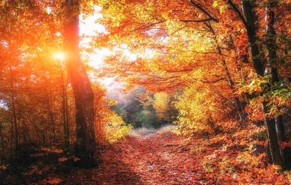 Picture Light, trees, beautiful, autumn, forests, Ukraine, foliage