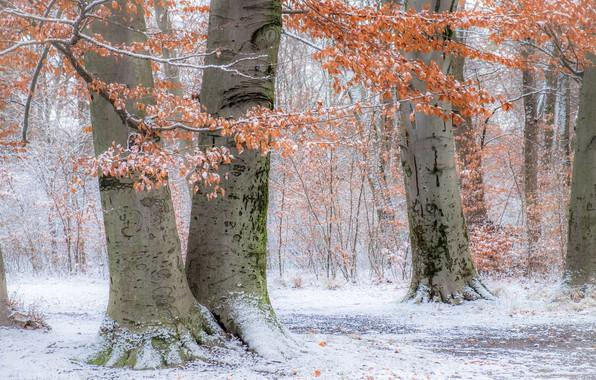 Picture autumn, snow, trees, Park, Germany, Munich, Bayern, Germany, Munich, Bavaria, English garden, English Garden