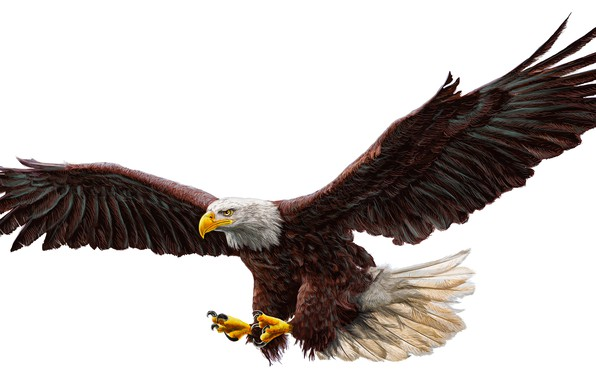 Picture real, drawing, bald eagle, work of art
