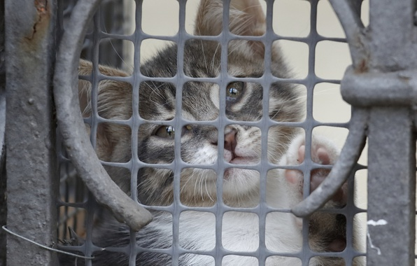 Picture a sad look, kitty, grille, sitting behind bars...