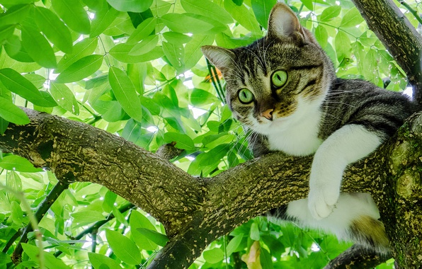 Picture cat, cat, leaves, tree, foliage, on the tree