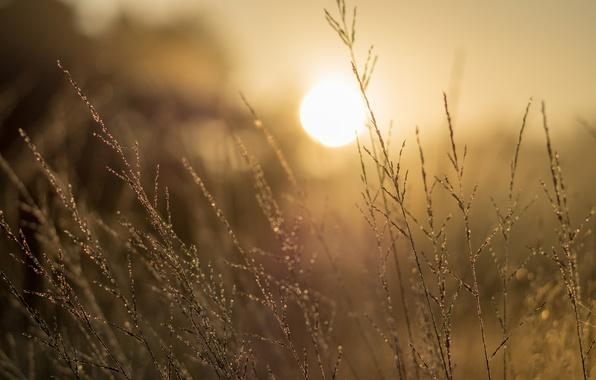 Picture grass, morning, sun, sunrise, dawn, dew