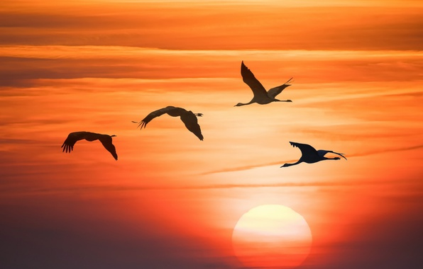 Picture the sky, sunset, birds