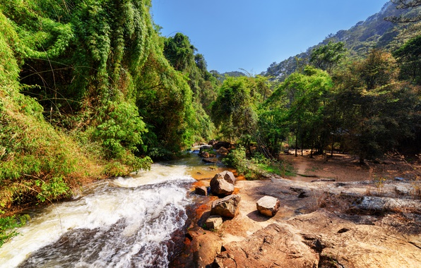 Picture forest, trees, mountains, stream, stones, Vietnam, Sunny