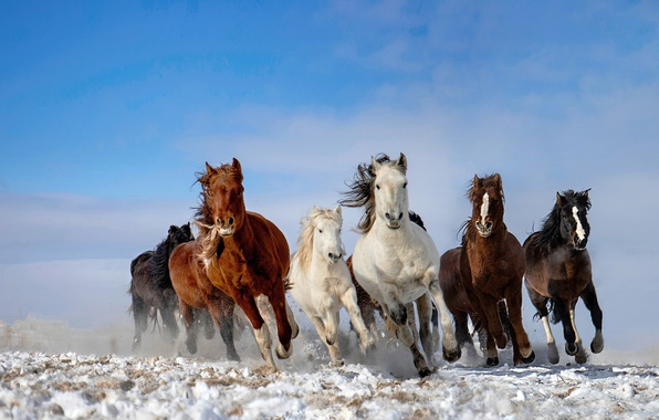 Photo wallpaper the herd, snow, horse, the sky