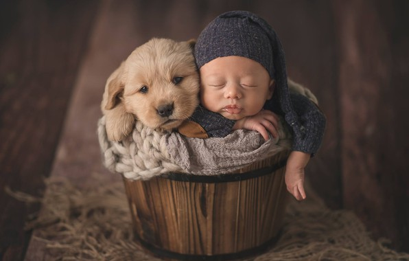Picture mood, sleep, dog, baby, puppy, child, cap, baby, the barrel, sleep