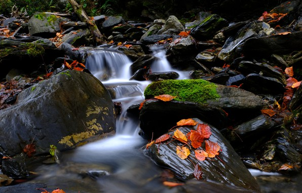 Picture Nature, Stream, Autumn, River, Forest, Leaves, Stones