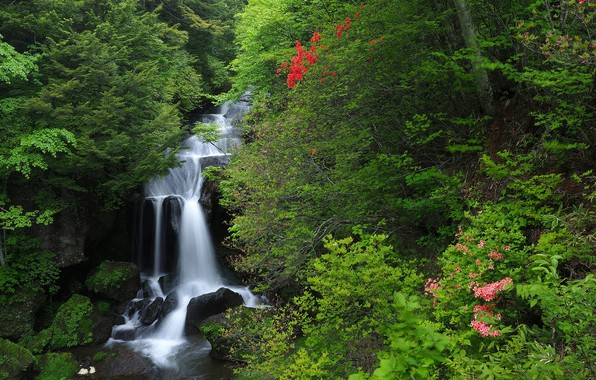 Picture forest, waterfall, Japan, Japan, cascade, Honshu, Honshu, Nikko National Park, National Park Nikko