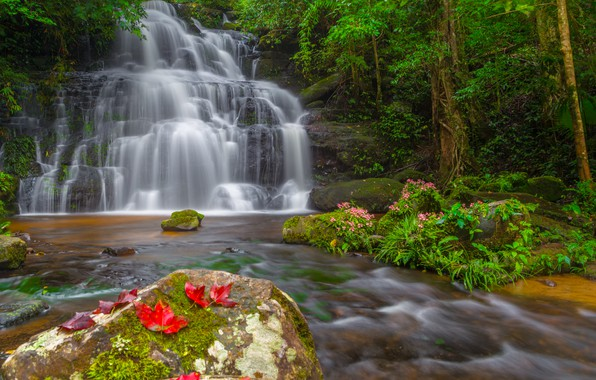 Picture forest, leaves, landscape, flowers, river, rocks, waterfall, summer, Thailand, forest, tropical, river, landscape, flowers, beautiful, …