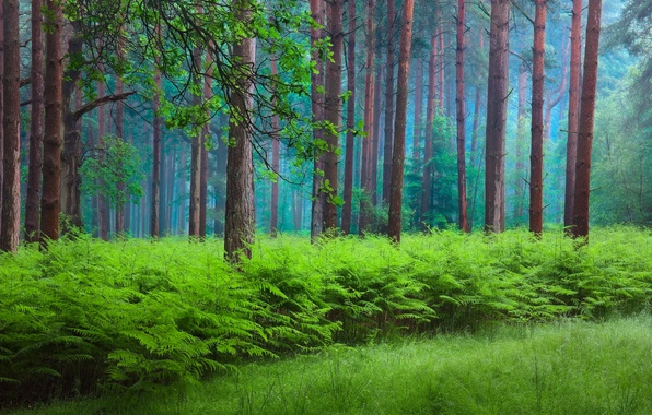 Picture forest, nature, spring, haze, fern
