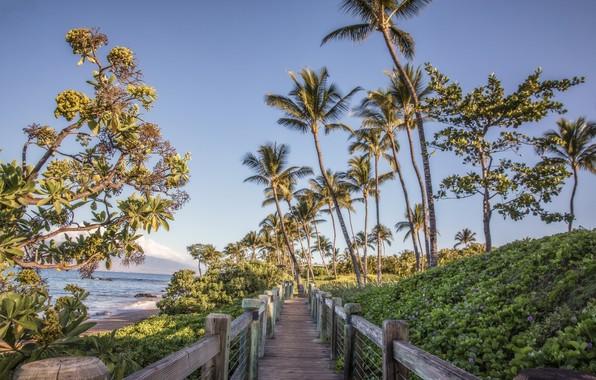 Picture flowers, bridge, tropics, palm trees, track, Perilla
