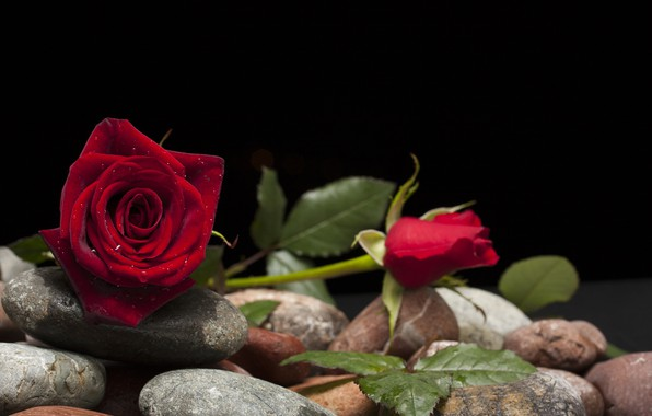 Picture flower, stones, rose, Bud