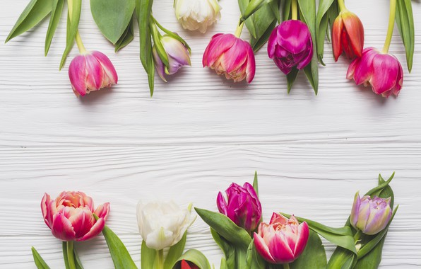 Picture Flowers, Spring, Tulips, Background