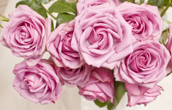 Picture flowers, pink, Bush, roses, buds, pink, flowers, roses