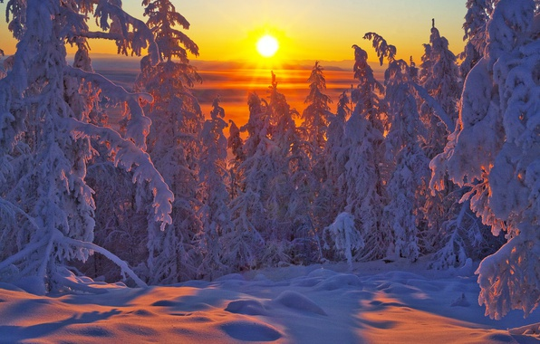 Photo wallpaper sunset, forest, Oymyakonsky district, Vladimir Ryabkov, Yakutia, ate, Russia, trees, winter, snow