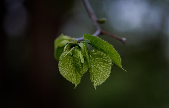 Photo wallpaper leaves, branch, blur